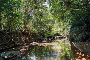 西表島のジャングルの写真素材 [FYI04093188]