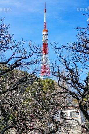 芝公園、東京タワーと梅の花の写真素材 [FYI04093327]