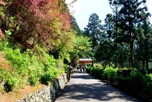 新緑,三室戸寺,山道から山門への写真素材 [FYI04093390]