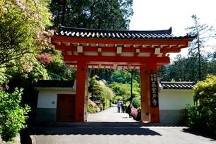 新緑,三室戸寺山門の写真素材 [FYI04093391]