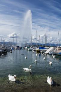 スイス、ジュネーブ大噴水の写真素材 [FYI04093702]