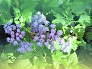 野に咲く花の写真素材 [FYI04093728]