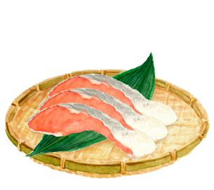 鮭の切り身 ザル 水彩のイラスト素材 [FYI04093932]