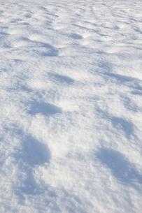 新雪積雪の写真素材 [FYI04094248]