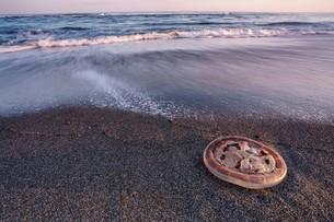 北海道 豊頃町 大津海岸 クラゲ 海岸 砂浜 波の写真素材 [FYI04094399]