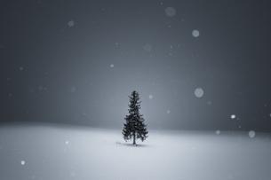 クリスマスツリーの木 美瑛 美瑛町 北海道 上川郡 冬の写真素材 [FYI04094400]