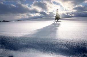 クリスマスツリーの木 北海道 美瑛町の写真素材 [FYI04094401]