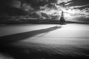 クリスマスツリーの木 美瑛町 北海道の写真素材 [FYI04094403]