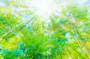 緑の森と木漏れ日の写真素材 [FYI04094601]
