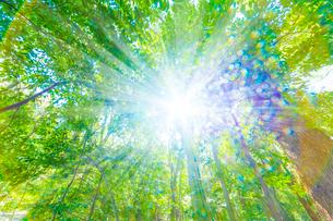 緑の森と木漏れ日の写真素材 [FYI04094602]
