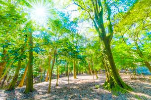 緑の森と木漏れ日の写真素材 [FYI04094603]