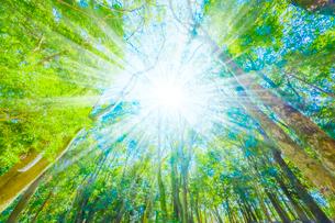 緑の森と木漏れ日の写真素材 [FYI04094604]