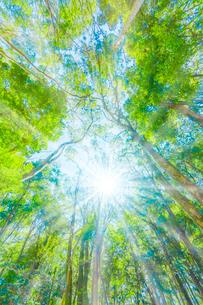 緑の森と木漏れ日の写真素材 [FYI04094605]