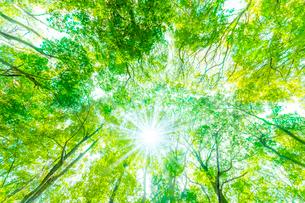 緑の森と木漏れ日の写真素材 [FYI04094606]