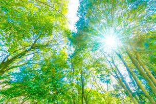 緑の森と木漏れ日の写真素材 [FYI04094607]