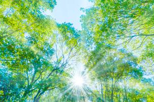 緑の森と木漏れ日の写真素材 [FYI04094608]