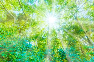 緑の森と木漏れ日の写真素材 [FYI04094609]