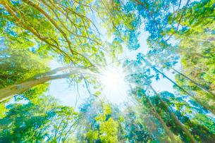 緑の森と木漏れ日の写真素材 [FYI04094610]