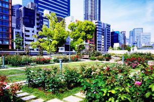 バラの公園とビルの写真素材 [FYI04094652]