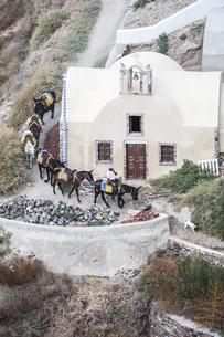 サントリーニ島で見る輸送手段用のロバの列の写真素材 [FYI04094968]