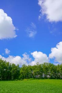 青空と緑の写真素材 [FYI04095057]