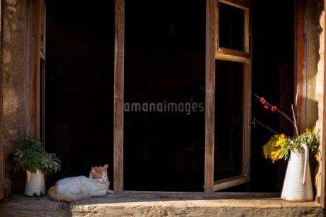 窓際でうたた寝をする猫と植物の写真素材 [FYI04095492]