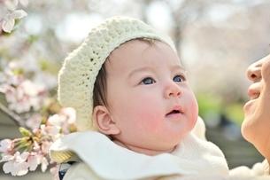 桜を見つめる赤ちゃんの写真素材 [FYI04095558]