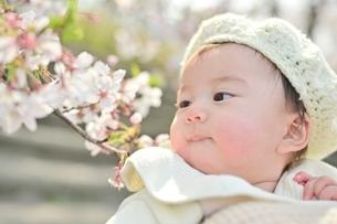 桜を見つめる赤ちゃんの写真素材 [FYI04095559]