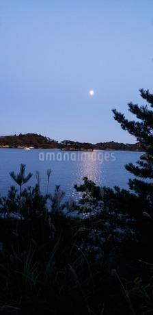 木々の間から見える月と光を反射する海の写真素材 [FYI04095566]