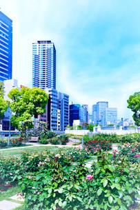 バラ園と高層ビルの写真素材 [FYI04095625]