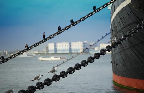 港の船と海鳥の写真素材 [FYI04095642]