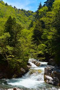 照葉峡 新緑の写真素材 [FYI04095804]