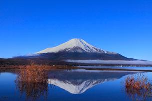 山中湖より富士山の写真素材 [FYI04095915]