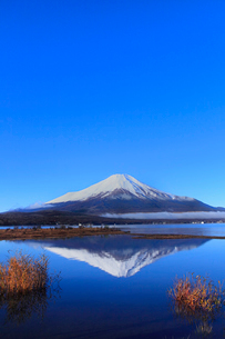 山中湖より富士山の写真素材 [FYI04095916]