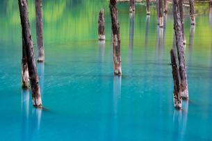 青い池の枯木林の写真素材 [FYI04095928]