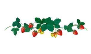 イチゴの水彩画のイラスト素材 [FYI04096200]