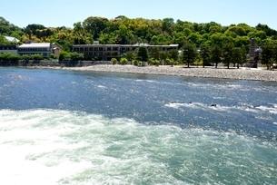 新緑の宇治川上流の流れの写真素材 [FYI04096251]