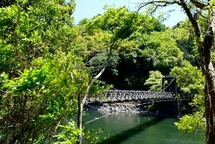 新緑の天ケ瀬吊り橋と宇治川上流の写真素材 [FYI04096254]