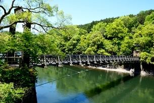 新緑の天ケ瀬吊り橋と宇治川上流の写真素材 [FYI04096259]