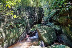 西表島のジャングルの写真素材 [FYI04096385]