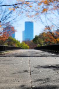 紅葉の代々木公園の歩道橋と高層ビルの写真素材 [FYI04096438]