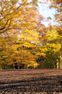 代々木公園の紅葉の写真素材 [FYI04096441]