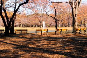 紅葉の代々木公園の写真素材 [FYI04096448]