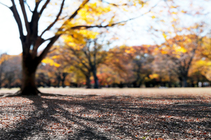 紅葉と大木の影の写真素材 [FYI04096453]