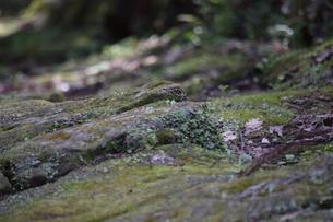 竜門坂の写真素材 [FYI04096599]