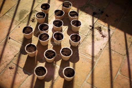 煉瓦の上に並べられた沢山の苗床の写真素材 [FYI04096755]