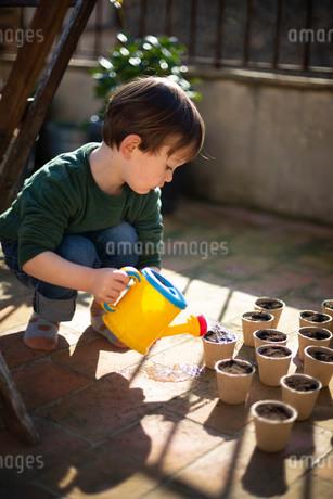 植物の種に水をやるハーフの子供の写真素材 [FYI04096758]
