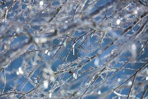 凍てつく木の枝の写真素材 [FYI04097004]