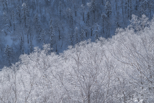霧氷の写真素材 [FYI04097118]