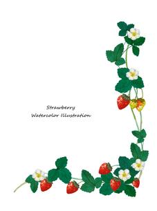 イチゴの水彩画のイラスト素材 [FYI04097125]
